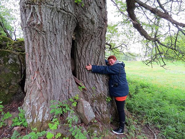 halaa-puuta_pieni
