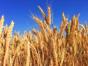 Uusi konsepti kiihdyttää elintarvikeviennin kasvua