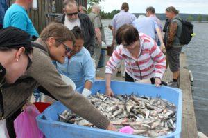 Kalasta kahisevaa